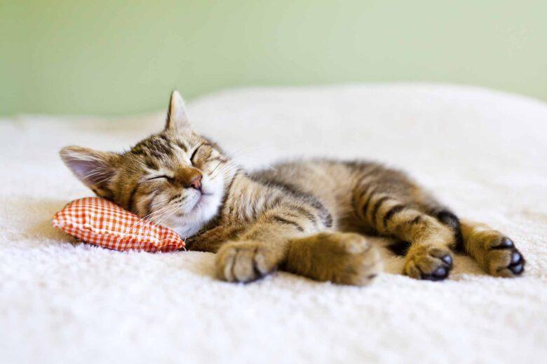 眠っている子猫の写真です。とてもリッラクスした表情です。